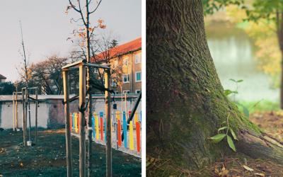 Konečne! V Seredi pribudne 100 nových stromov v meste. Viete kde?
