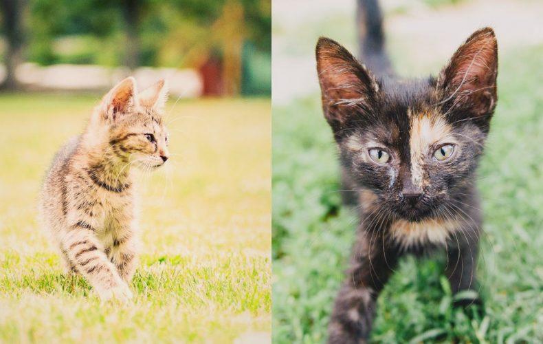 Nekupuj, ale adoptuj. Tieto dve mačiatka si zamilujete