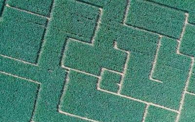 Vlčkovce pobláznili svoje okolie kukuričným bludiskom. Počuli ste už o ňom?