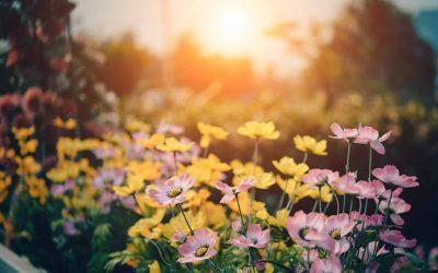 Pozrite sa na najkrajšie záhradky v Seredi a zahlasujte za svojho favorita