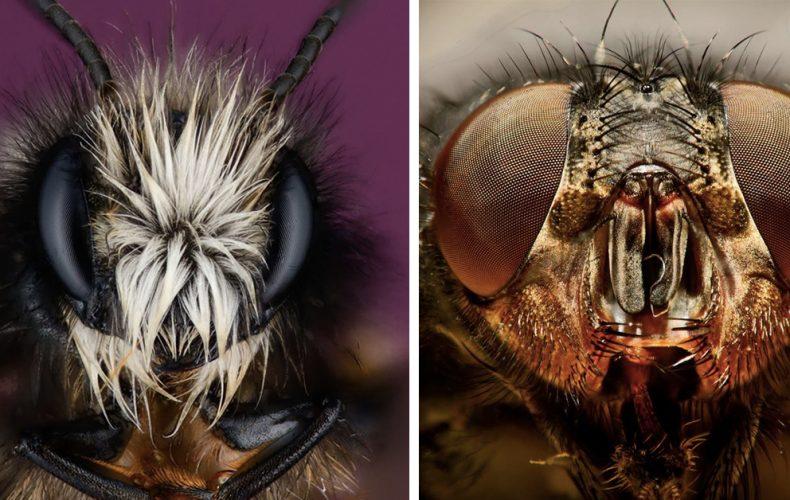 Predstavujeme vám fotky v podaní Viktora Bukovského. Zachytáva hmyz spôsobom, aký ste v Seredi ešte nevideli