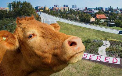 Neuveriteľné. Naša škola si adoptovala kravičku. Chcete jednu aj vy?