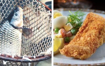 Vianočný predaj rýb v Seredi je spustený. Ktorú rybu máte na Vianoce najradšej?