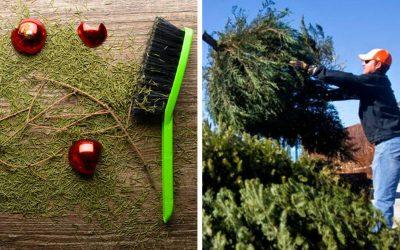 Máte ihličie v celej obývačke? Prinášame vám termíny zberu vianočných stromčekov