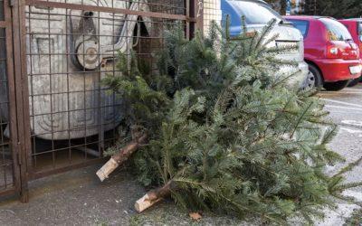 Vianočným stromčekom pomaly odzvonilo. Prinášame vám jednotlivé termíny ich zberu