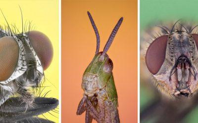 Seredčan Viktor objavuje na ďalších fotkách hmyzu najdetailnejšie kúzla prírody
