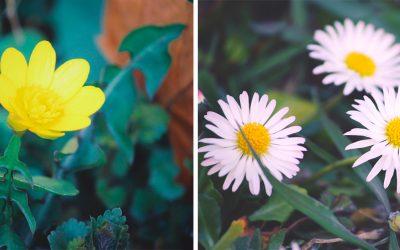 Príchod jari sprevádza aj kvitnutie krásnych kvetov. Víkendovú prechádzku určite odporúčame