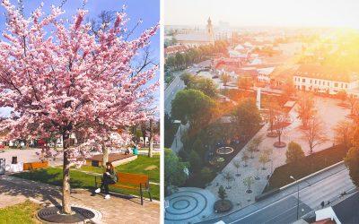Na Flora Feste v Seredi zažijete príjemnú atmosféru kvetov, stromov, byliniek a zábavy