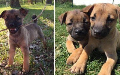 Dve rozkošné šteniatka zo seredského OZ Tulák túžia po novom domove