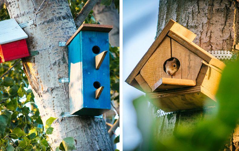 V Seredi niekto dobrovoľne osádza nádherné vtáčie búdky. Hniezda lákajú nielen vtákov, ale aj krásne veveričky