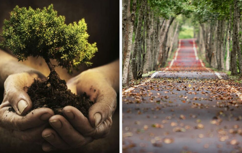 V Čechách dostávajú bežní občania peniaze na výsadbu stromov v mestách. Chceli by ste podobnú výsadbu aj v Seredi?