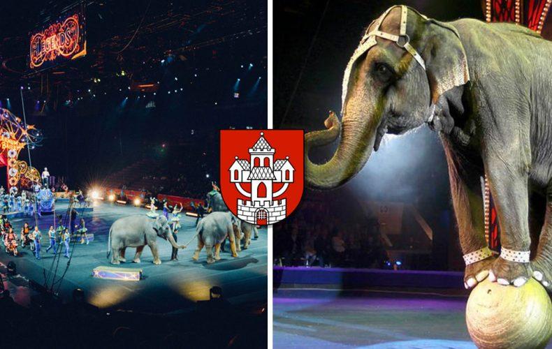 Od 1. novembra 2019 nesmú v cirkusoch na Slovensku vystupovať zvieratá. V Seredi tak už neuvidíte slony alebo primáty