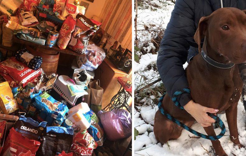 Pomôžu Seredčania opusteným zvieratám? Vianočná zbierka je práve spustená