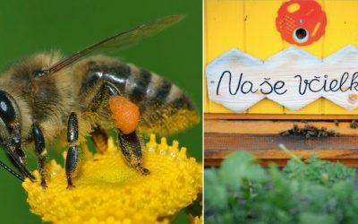 Adoptujú si Seredčania svoj vlastný úľ? Včela je najdôležitejším živočíchom na Zemi