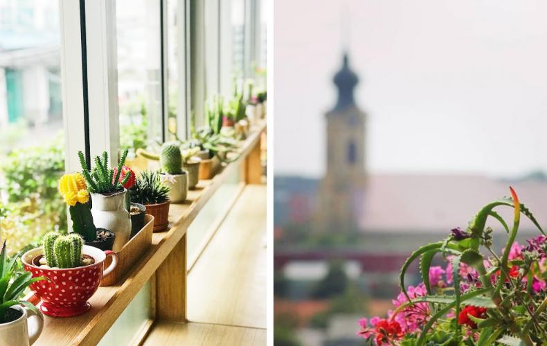 Príďte si vymeniť svoje rastliny za iné na ďalšom skvelom SWAP podujatí v Seredi