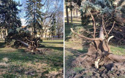 Silný vietor dokázal vyvaliť strom v Zámockom parku. Dávajte si pozor, vietor ešte neutícha