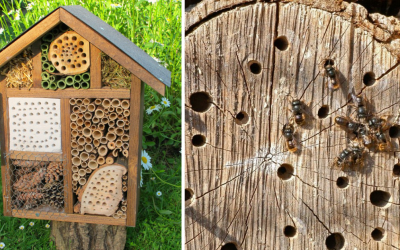 """Pomôžte udržiavať biologickú diverzitu našej krajiny. Prečítajte si, ako vyrobiť domček pre hmyz alebo """"hmyzí hotel"""""""