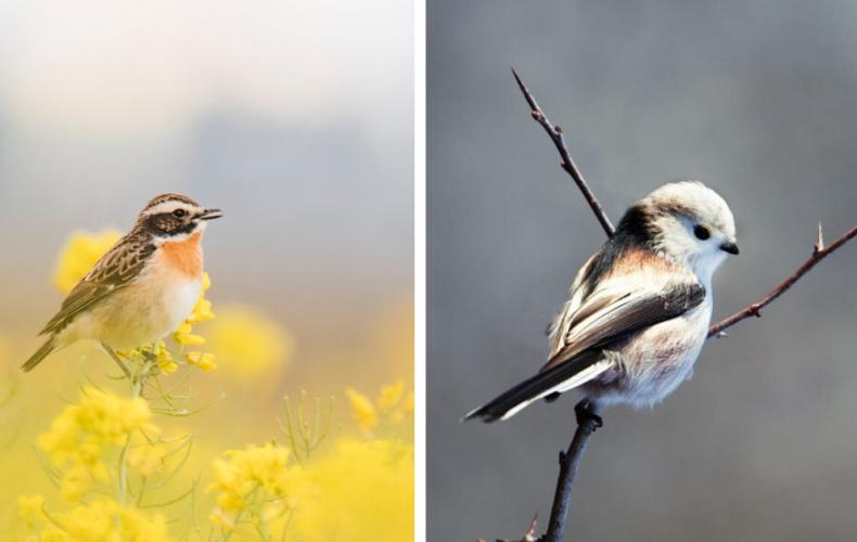 Budí Seredčanov v lete spev vtákov? Vieme, prečo a v akom poradí spievajú jednotlivé druhy