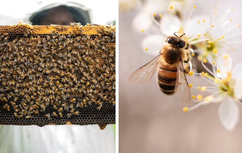 Budú včely na Slovensku chráneným živočíchom? Minister životného prostredia vidí problém v chemických postrekoch