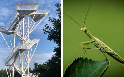 Na Devínskej Kobyle stojí nová vyhliadková veža, ktorá má pripomínať modlivku zelenú. Oplatí sa ju navštíviť?