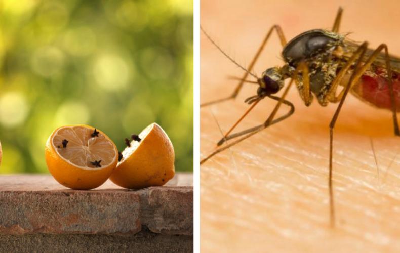 Otravujú vás už komáre? Tu sú najlepšie tipy proti nim. Vyrobiť a vyskúšať si ich môžete aj doma