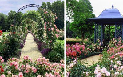 Neďaleko Trnavy vzniklo unikátne rozárium s 90 odrodami ruží. Toto čarovné miesto môžete voľne navštíviť