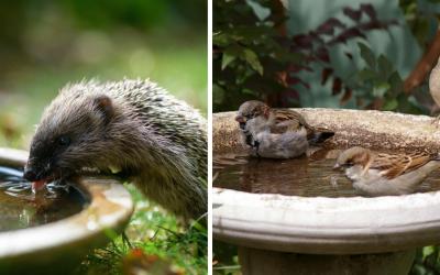 Myslite v letných horúčavách aj na divé zvieratá. Miska vody pod stromom alebo na parapete je dôležitá pre mnohé z nich