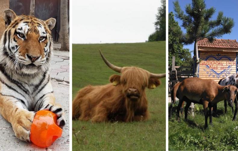 Kam za zvieratkami v okolí Serede? Vybrali sme pre vás týchto 11 zaujímavých miest