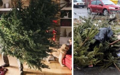 Vianočné stromčeky končia nielen na skládkach a v spaľovniach. Kedy bude prebiehať ich zber v Seredi?