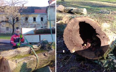 Revitalizácia zelene a výrub niekoľkých stromov v seredskom zámockom parku prinesú výrazné zmeny