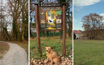 Naučte svoje deti, čo všetko môžu objaviť v seredskom Zámockom parku. Aké druhy zvierat v ňom žijú?
