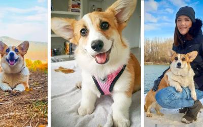 ROZHOVOR: Lara je najsledovanejším psíkom z okolia Serede. Získala aj titul Slovenská Junior šampiónka krásy
