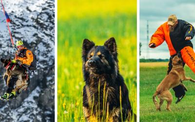 ROZHOVOR: Nechýba mu odvaha a cit pre zvieratá. Miroslav Hajdú objavil vďaka psom čaro Serede