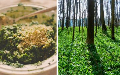 Začala sezóna medvedieho cesnaku. Kde ho nájdete v okolí Serede a ako ho spotrebovať?