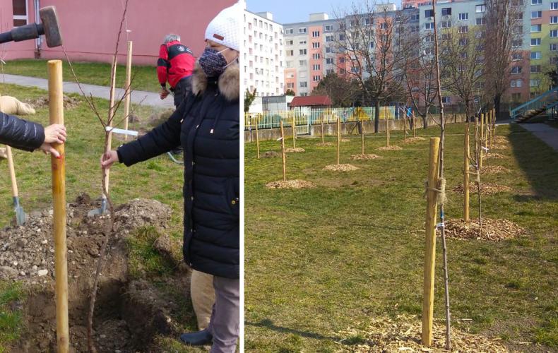 Prvý Mestský ovocný sad v Seredi bol vysadený v priebehu marca. Pre verejnosť bude sprístupnený po uvoľnení opatrení