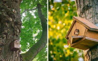V našom Zámockom parku pribudlo množstvo hniezdnych búdok. Pre koho sú a prečo sú potrebné?