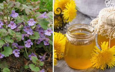 Viete ako si vyrobiť púpavový med? Prinášame vám bylinkové recepty, ktoré si doma ľahko pripravíte práve teraz