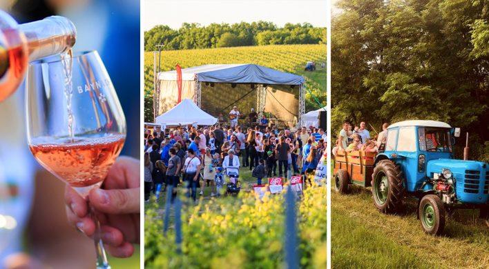 Vinárstvo BAYNACH pozýva všetkých milovníkov kvalitného vína na podujatie Špacírka po vinici v neďalekých Bojničkách