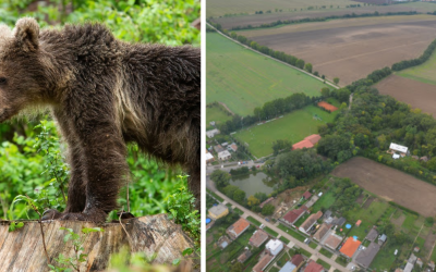 Pri obci Abrahám sa objavila medvedica s mláďatami, prišla tam z Majcichova. Šelmy čoraz častejšie schádzajú južnejšie