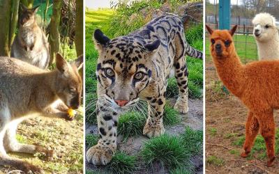 Na výlet za zvieratkami nemusíte cestovať do ZOO. Vybrali sme pre vás najkrajšie ranče, minizoo a farmy v okolí Serede