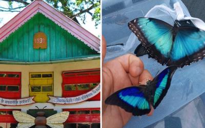 V blízkosti Serede nájdete vyše 200 voľne poletujúcich motýľov z tropických oblastí. Navštívte Motýliu záhradu na Paseke v obci Kráľová pri Senci