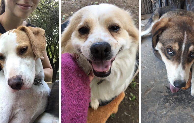 Nájdime im nový milujúci domov. Opustené psíky z OZ Tulák hľadajú nových majiteľov