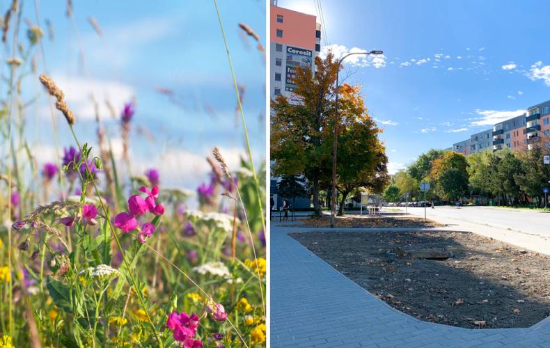 Cukrovarská ulica v Seredi sa okrem novej dlažby dočká aj výsadby lúčnej zmesi kvetov. Na kedy je plánovaná výsadba?